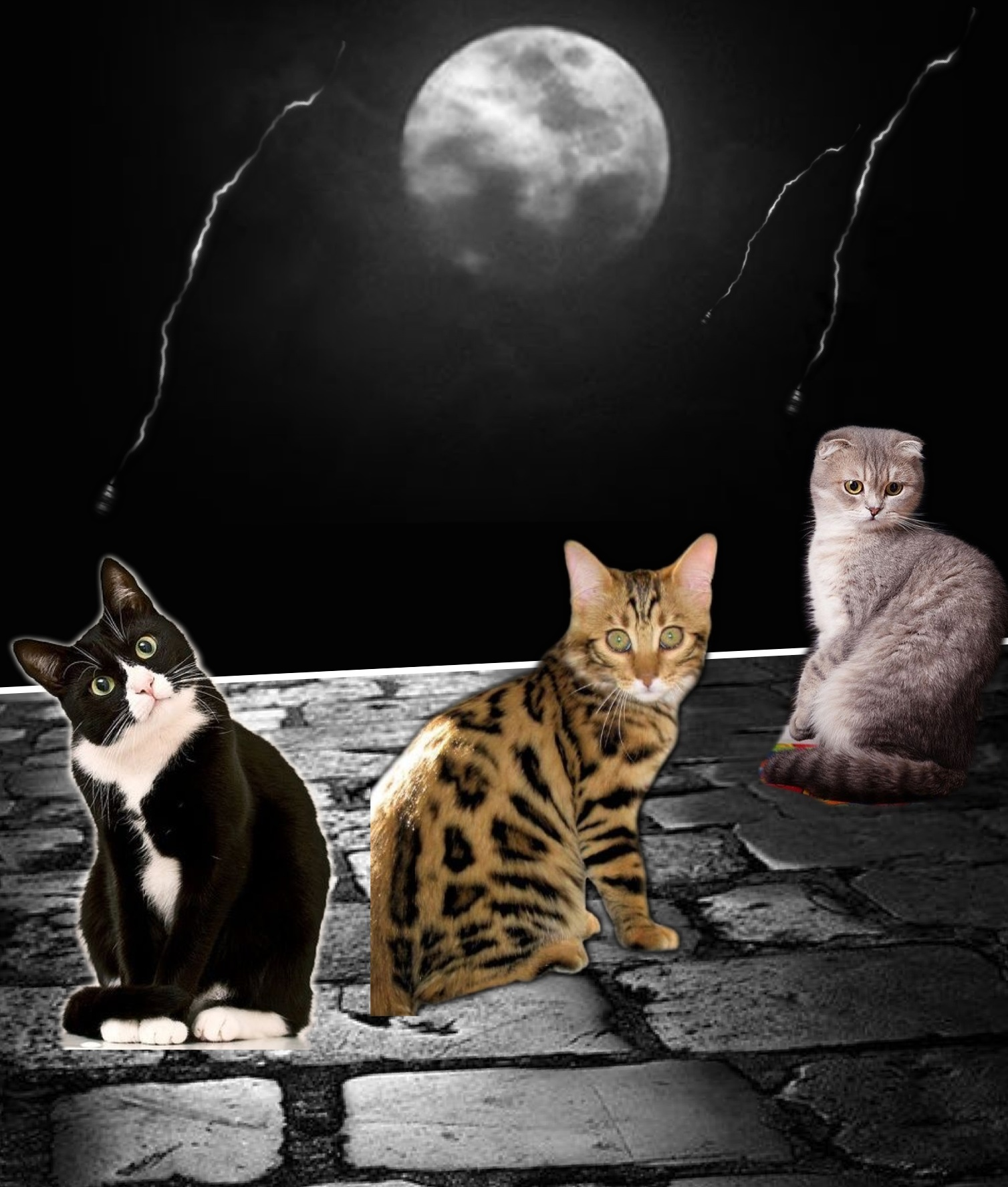 Cats Come Out At Night